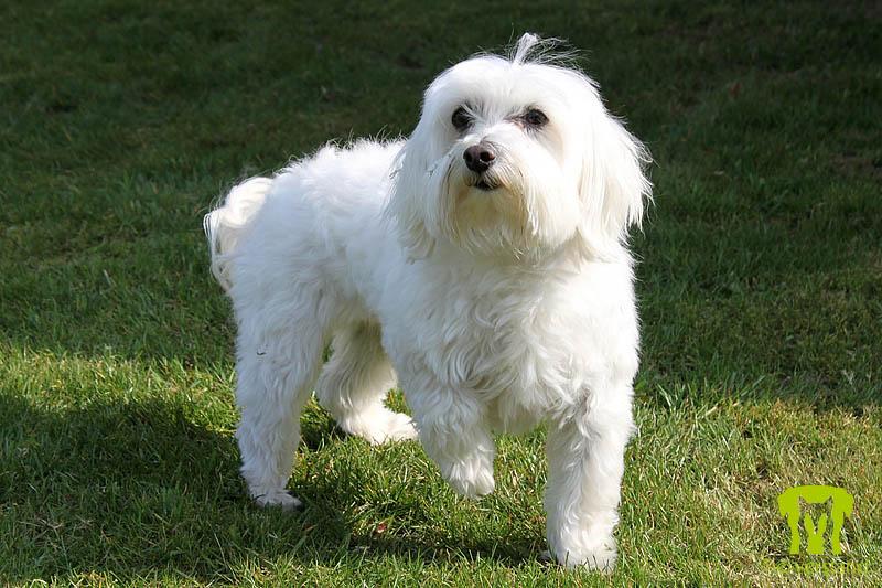 Best Dog Breeds For Allergies